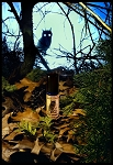 NIGHT WATCHER PERFUME OIL 5 ml - Forest Floor, Tree Tops, Bark, Mountain Air, Fir Balsam, Juniper, Moss, Oud, Dried Herbs, Cedar Tips
