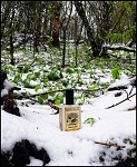 SNOWMINT MALLOW EAU DE PARFUM (EDP) 60 ml Perfume Spray - Peppermint, Vanilla Cake, Sugar Cookies, Flaked Coconut & Marshmallow Creme